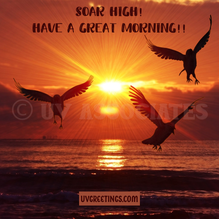 Silhouette of Birds with a rising sun, inspiring to soar high