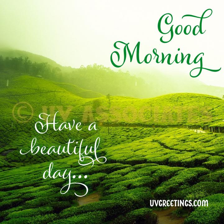 Tea Plantation, Good Morning image goes green