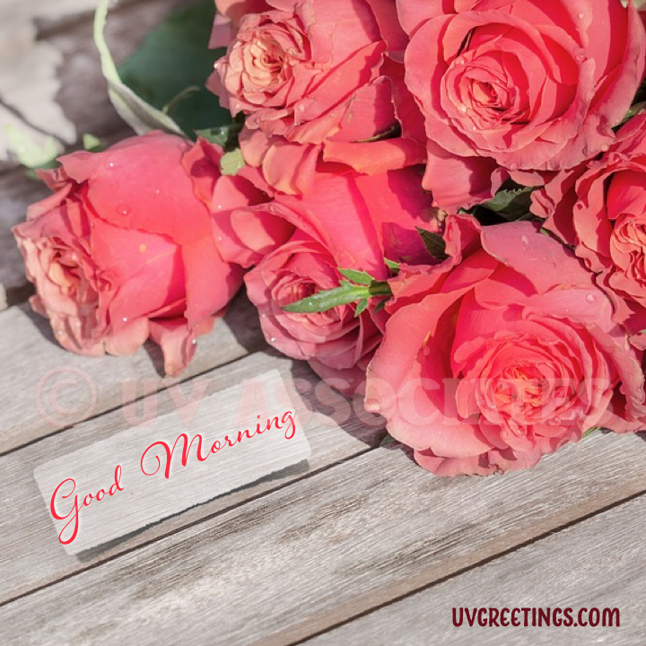Bunch of Peach Roses on Bench - Good Morning Image