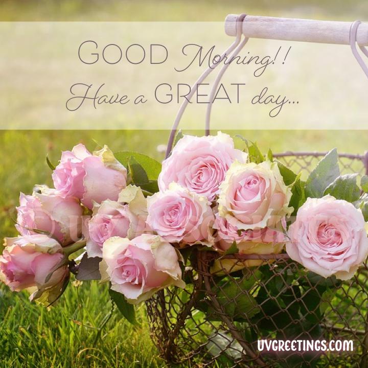 Pink Roses bunch, Rose Garden, Good morning Image
