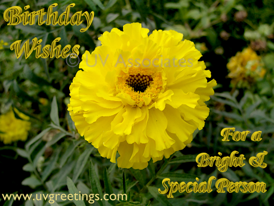 Ecard Bright Yellow Flower - Special Person