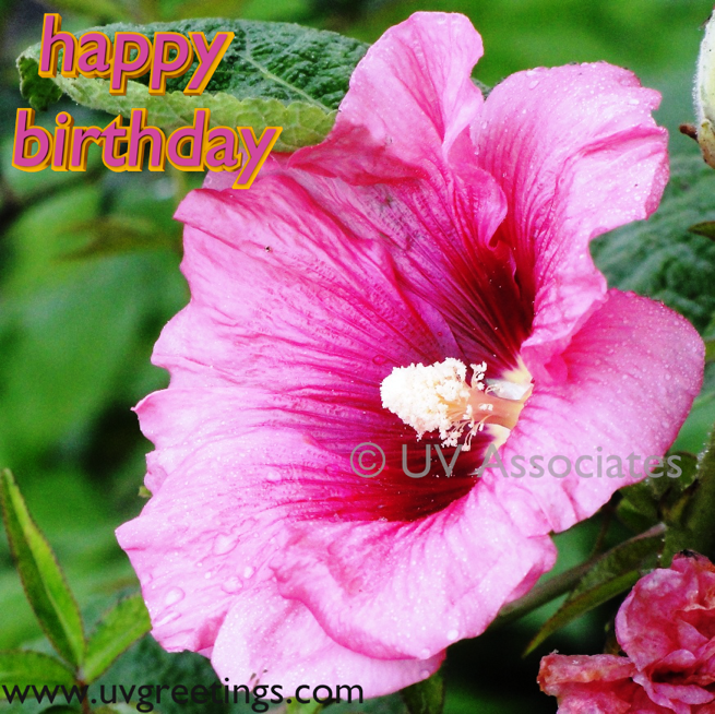 Ecard for wishing Birthday - Raindrops on Bright Pink Flower