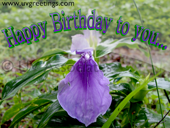 Simple and Bright Birthday ecard with purple flower