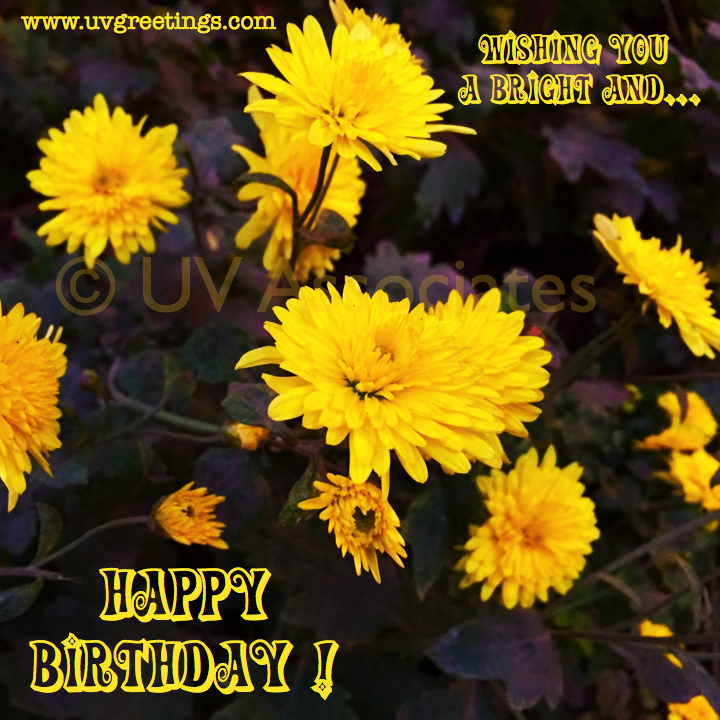 Bright yellow flowers for wishing Happy B'day