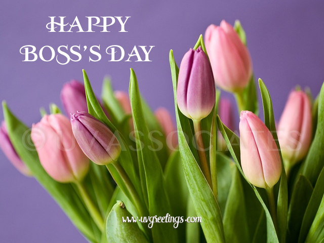 Beautiful Tulips for Boss's Day