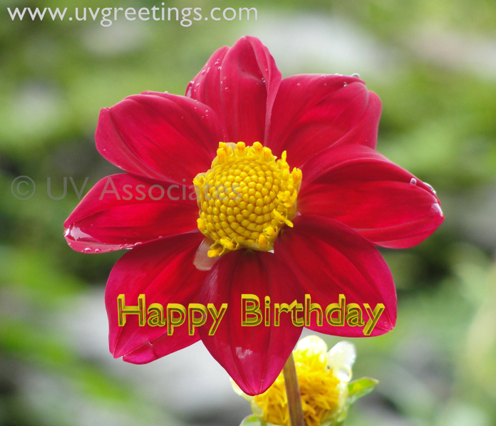 birthday  page   uvgreetings, Beautiful flower