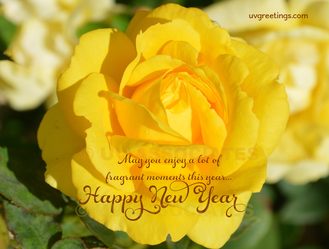 Bright Yellow Rose for Wishing for Fragrant Moments