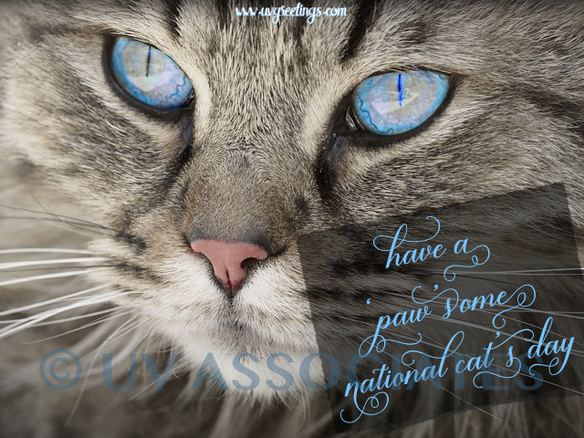 Paw-some National Cat Day - Stunning Blue eyes