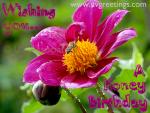 Ecard with Pink flower Featuring a honey bee